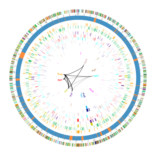 """Genome atlas"" of the sigma factors of Pseudomonas aeruginosa"