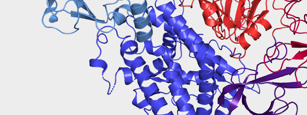 Toxic protein: cytotoxic necrotizing factor (CNF), consistig of a transport (blue) and intoxication device (red).