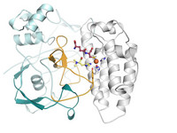 At high resolution and in 3D - Scientist from the HZI and the University of Basel solved the structure of the enzyme, EgtB.