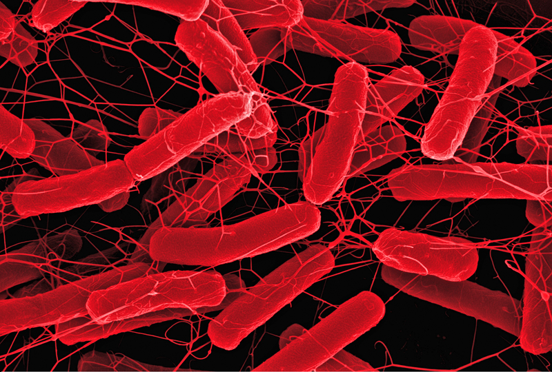 clostridium defficil Clostridium difficile a fecal organism endemic in hospitals and responsible for the majority of hospital-acquired cases of diarrhoea in elderly patients its prevalence in hospital is largely due to the high levels of antibiotic usage.