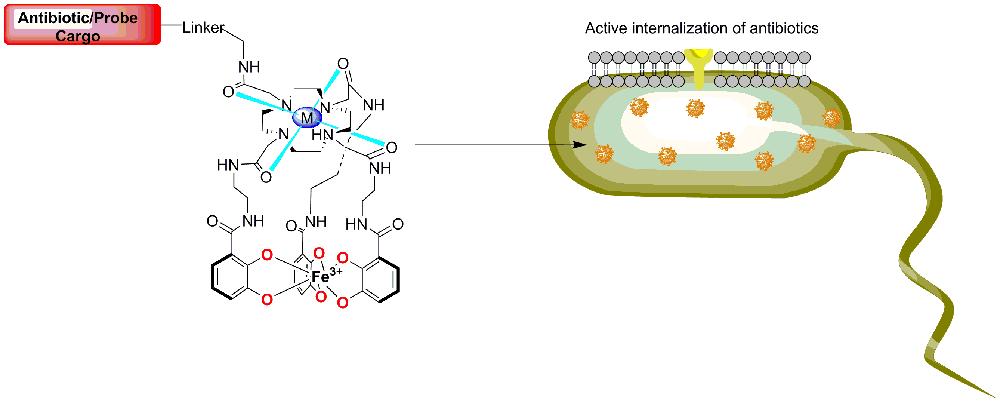 Chemische Biologie